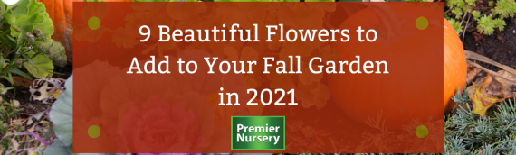 9 Beautiful Flowers to Add to Your Fall Garden in 2021