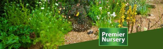 5 Ways Mulch Vastly Improves Your Garden