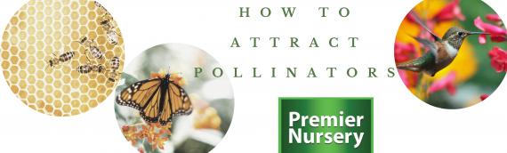 Butterflies, Bees & Birds: How to Attract Pollinators in Your Garden