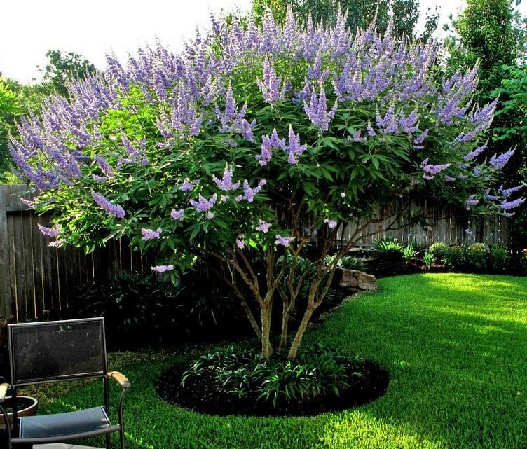 flowering shrubs summer color that beats the heat premier nursery